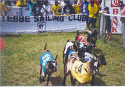 Ascot Goat Races, an event held annually in Kampala